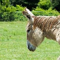 Adopt A Pet :: Athos - Hinesville, GA