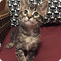 Adopt A Pet :: Hunter C170098:PENDING ADOPTION - Edina, MN