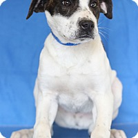 Adopt A Pet :: Josh - Waldorf, MD