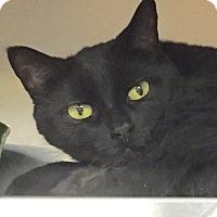 Adopt A Pet :: Bubblegum - Manchester, NH