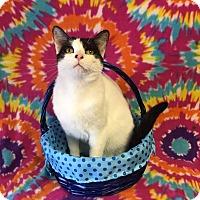 Adopt A Pet :: Lance - Richmond, VA
