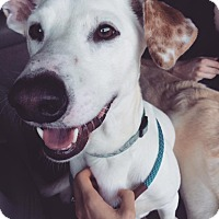 Adopt A Pet :: Speckles - Westport, CT