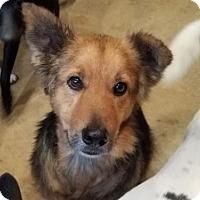 Adopt A Pet :: Moses - San Antonio, TX