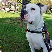 Adopt A Pet :: Mary - Garden City, MI