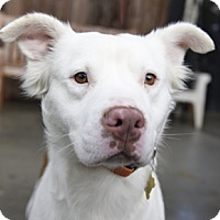 Adopt A Pet :: PEACHES - Pt. Richmond, CA