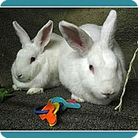 Adopt A Pet :: Karl & Molly - Williston, FL