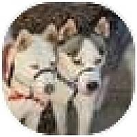 Adopt A Pet :: Echo & Isis - Golden, CO