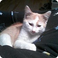 Adopt A Pet :: Tator - St. Louis, MO