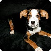 Adopt A Pet :: Flower - Lufkin, TX