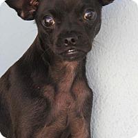Adopt A Pet :: Batman - Yuba City, CA