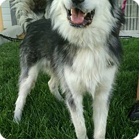 Adopt A Pet :: Colby - Meridian, ID