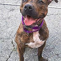 Adopt A Pet :: Geronimo - Carmel, NY