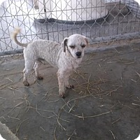 Adopt A Pet :: T. Boone - Bonifay, FL