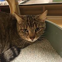 Adopt A Pet :: Emma - Monroe, GA