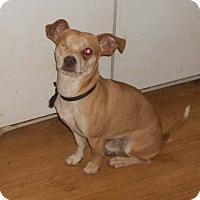 Adopt A Pet :: Roman - North Wilkesboro, NC