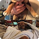 Adopt A Pet :: Disney's Goofy/Buddy
