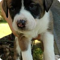 Adopt A Pet :: Sunny - Raleigh, NC