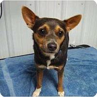 Adopt A Pet :: Sam - Irvington, KY