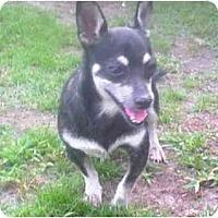 Adopt A Pet :: FOUND - Summerville, SC