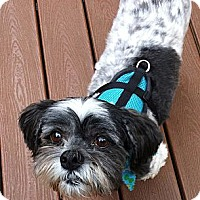 Adopt A Pet :: Bingo - Toronto, ON