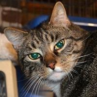 Adopt A Pet :: Luna - Taftville, CT