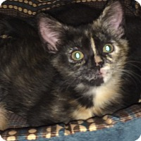 Adopt A Pet :: RUE aka BELLAMIA - Hamilton, NJ