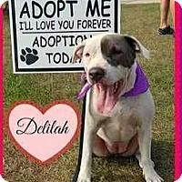 Adopt A Pet :: Delilah - Riverview, FL