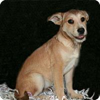 Adopt A Pet :: Willie - Lufkin, TX
