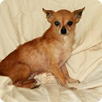 Adopt A Pet :: Mighty - Umatilla, FL