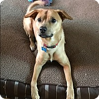 Adopt A Pet :: Hank - Middlesex, NJ