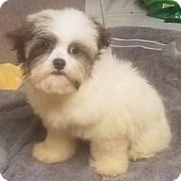 Adopt A Pet :: Zoovie - Canoga Park, CA