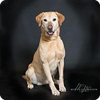Adopt A Pet :: Elliot - Naperville, IL