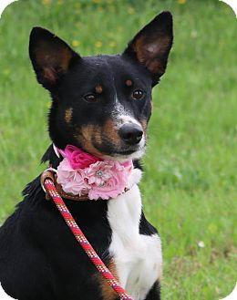 German Shepherd Dog Mix Dog for adoption in Lacey, Washington - Pippa