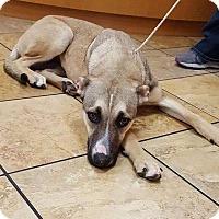 Adopt A Pet :: Mary - Las Vegas, NV
