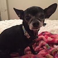 Adopt A Pet :: Moana - Mesa, AZ