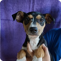 Adopt A Pet :: Patty - Oviedo, FL