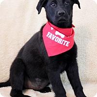 Adopt A Pet :: Kelly Cass - Dalton, GA