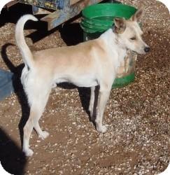 Terrier (Unknown Type, Medium) Mix Dog for adoption in Post, Texas - Rex