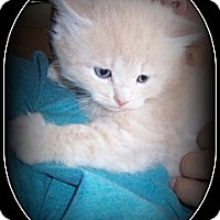 Adopt A Pet :: Peeps - HOW CUTE IS HE?!! - South Plainfield, NJ