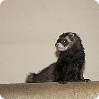 Adopt A Pet :: Skeeter - Chantilly, VA