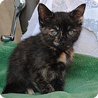 Adopt A Pet :: Ami - Palmdale, CA