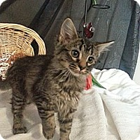Adopt A Pet :: Taboo - Clearfield, UT