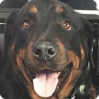 Adopt A Pet :: Rooney - Seffner, FL