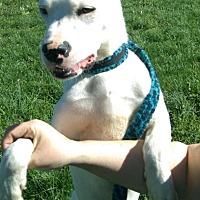 Adopt A Pet :: Kobe - Lancaster, KY