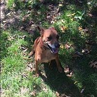 Adopt A Pet :: Rico - Elyria, OH