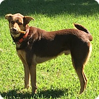 Border Collie/Setter (Unknown Type) Mix Dog for adoption in ROSENBERG, Texas - Leroy