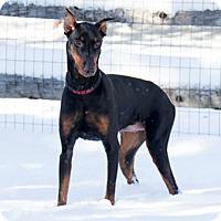 Adopt A Pet :: HAPPY - Greensboro, NC