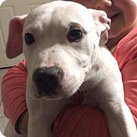 Adopt A Pet :: Buttercup - Bellingham, WA