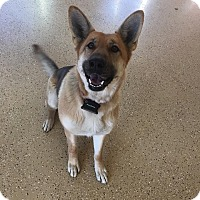 Adopt A Pet :: Star - Marion, IN