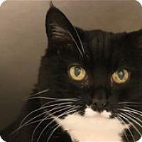 Adopt A Pet :: Oreo K. - Lincoln, CA